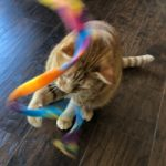 cat sitter in Prior Lake, MN
