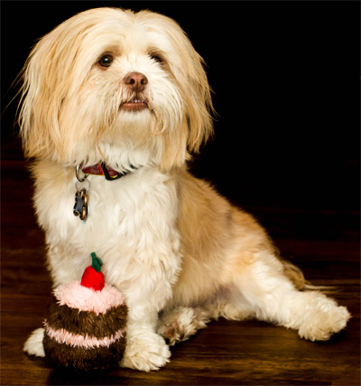 Prior Lake dog boarding and daycare